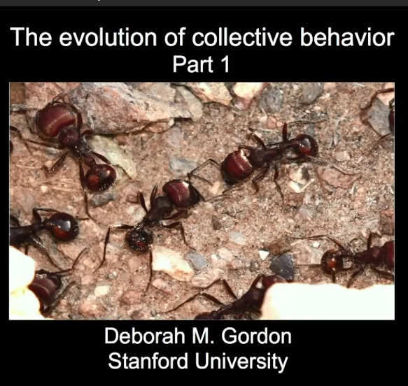 The eolution of collective behavior集..